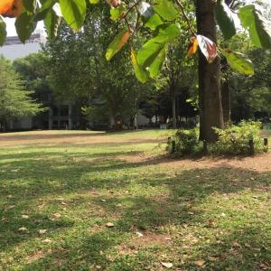 夏と秋のはざかい 高田馬場・戸山公園