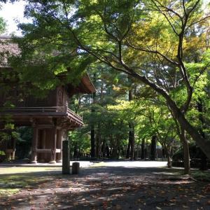 埼玉の新座・平林寺 …紅葉偵察に行ってきた