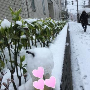 昨日は季節はずれの雪