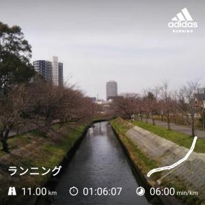 海老川桜開花状況ラン