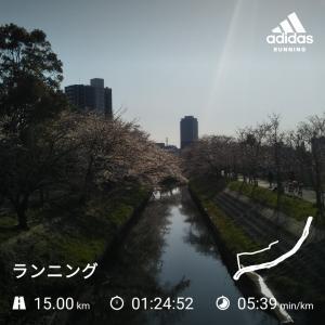海老川の桜散り始める。マスク洗いも始まる(^^ゞ