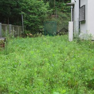 「庭の草刈り」で体重増量 ?!