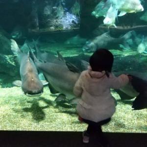 【岐阜県】淡水魚の水族館「アクアトトぎふ」は赤ちゃん連れでも楽しめる!【1歳・3歳】