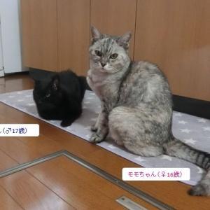 今日は滞在ワンちゃんが居ません! ネコさんたちのワクチン接種に行って来ました~