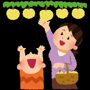 梨狩りのシーズン!関西でおすすめしたいベスト3を紹介します!