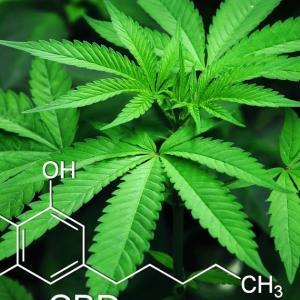 CBD(大麻から抽出された成分カンナビジオール)製品形態についてのいくつかの疑問