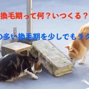 犬と猫の換毛期を理解して少しでもラクに過ごそう!