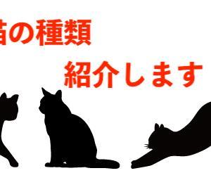 自分にあった猫を探そう!日本で飼える猫種一覧