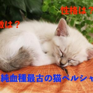 ペルシャ猫の性格・特徴・平均寿命、かかりやすい病気と対策