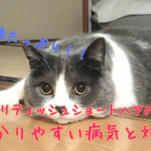 猫の病気と対策方法〜ブリティッシュショートヘア〜
