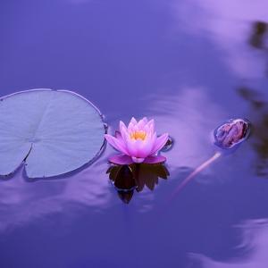 すぐに余命を考えました…松崎悦子さん「印環細胞がん」との闘病を振り返る