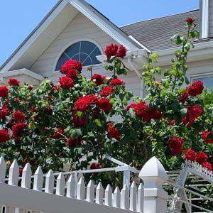 薔薇。。から紫陽花の季節へ。。