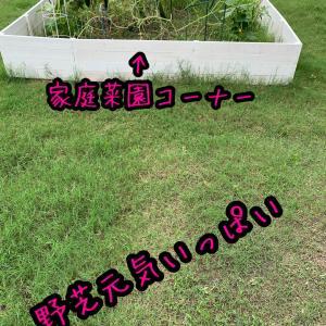 野芝元気すぎぃ〜湿度高すぎぃ〜。。
