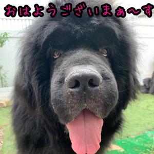 16歳差の大型犬。。