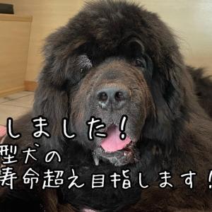 ご長寿犬目指します