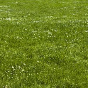 粘土質で日当たりの悪い庭に天然芝TM9をDIYで張る①