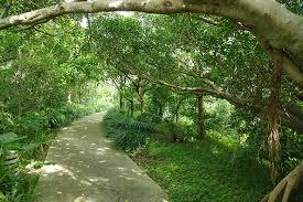 『自然と触れ合う』が疲労やストレスの最強の解決策って本当!?