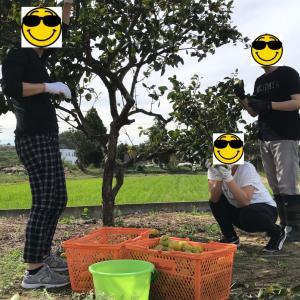 最後の柿を収穫しました