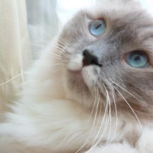 【ちょっとしたコツ】猫に対する話しかけ方