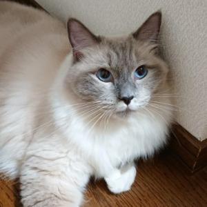 猫にご褒美のおやつをあげない選択肢について考える