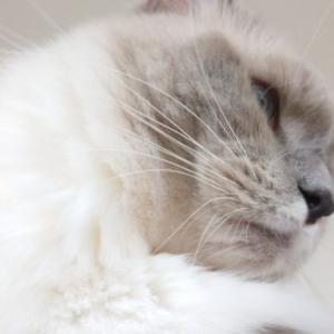 猫が光くしゃみ反射をした!?謎多き光くしゃみ反射とは