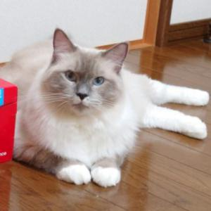 消費増税前に猫用品で購入したものについて
