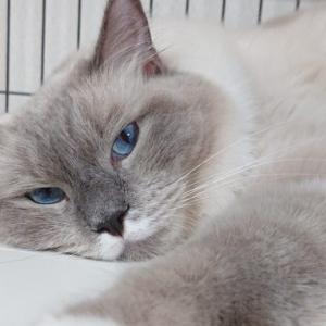 猫が好きな匂い・嫌いな臭いについて
