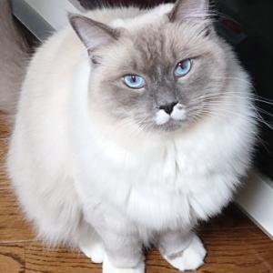 猫との遊び方 ブログ内記事まとめ