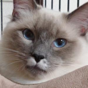 月齢を意識した猫のしつけをする