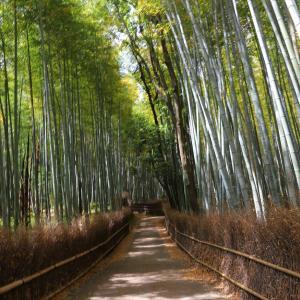 嵐山~渡月橋、竹林の小径、天龍寺。。