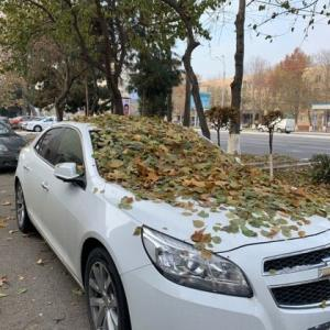 落ち葉の量がすごい