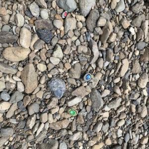 《一時帰国中》河原の小石