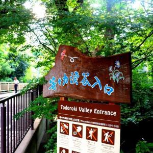 世田谷のんびりデートのススメ:等々力渓谷公園