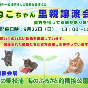第二回開催です(^^♪ 9月22日(日)ニャンちゃん譲渡会開催します。