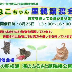 何度も再掲ですが(^^♪ 8月25日(日)ニャンちゃん譲渡会開催します。