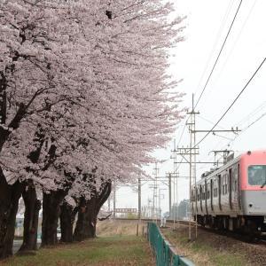 桜色の競演、725で