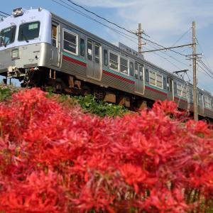 726赤い花に彩られ
