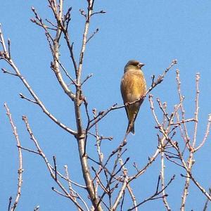 裏山で野鳥を撮る!