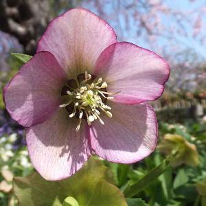 群馬県緑化センターの花々を撮る
