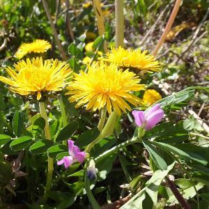 ぶらブラ花を撮ってきました🌸