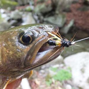 渡良瀬川支流のイワナ釣り