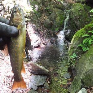 源流の滝壺イワナ