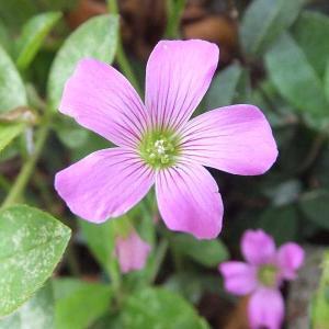 梅雨の晴れ間に身近な花を撮る🌸