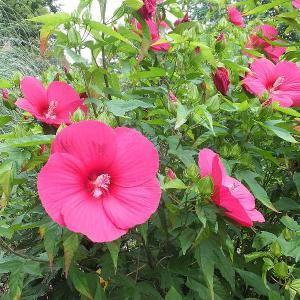群馬県緑化センターの花と実🌸