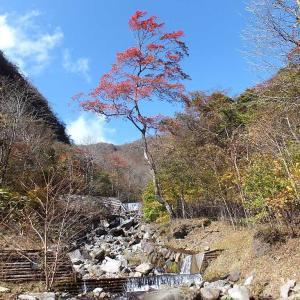 利平茶屋の紅葉と渓流散策🐟(赤城山)