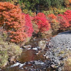 黒坂石川の紅葉とヤマメを撮る🍁🐟