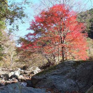 桐生川上流の紅葉を撮る🍁📷