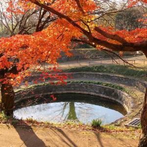 金山の残り紅葉を試し撮り(太田市)