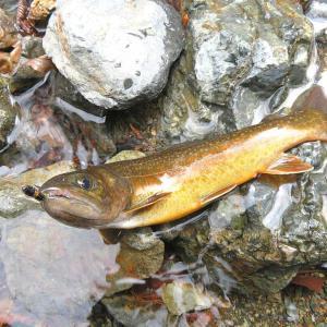 落石の支流でイワナ釣り(黒坂石川)