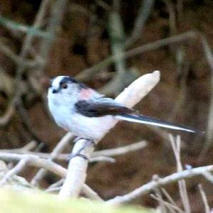 水道山で野鳥を撮る(太田市)